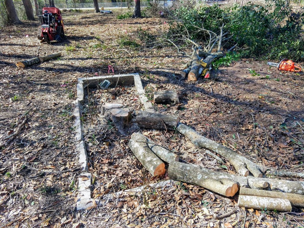 Laura Henderson's grave with the Ligustrum tree cut down.